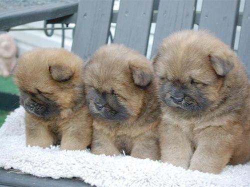 adorable puppies!