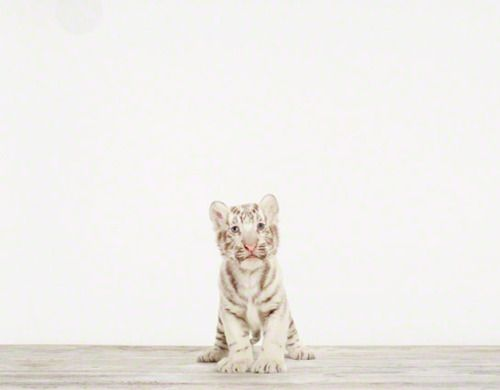 Baby animal photographs by Sharon Montrose