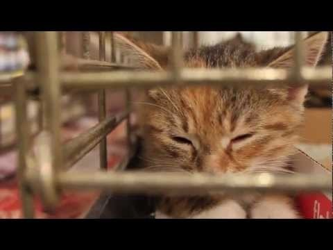 Homeward Bound Animal Rescue
