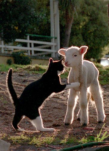 Lulu & The Lamb