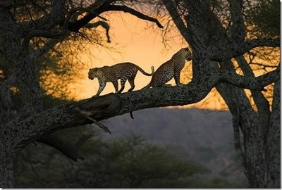 Beautiful Wild animals pictures and Nature Photo Gallery