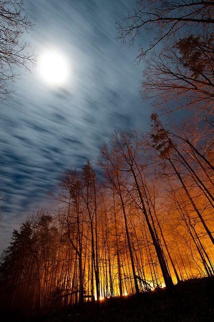 ? Full moon over illuminated forest - New Castle, Virginia