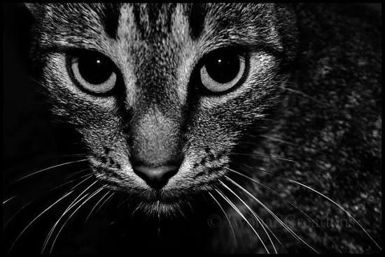 Cat Animal Photography - Fine art Print