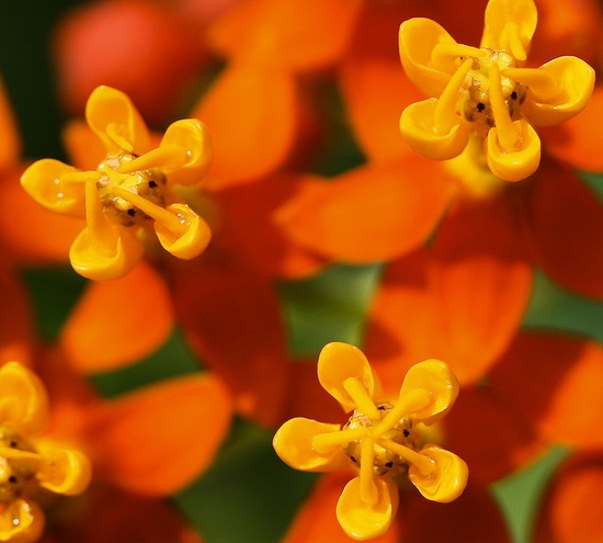 yellow on orange