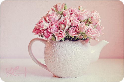 love pink roses