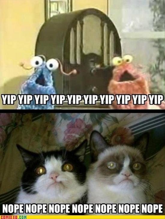 Pokey and Tard the Grumpy Cat