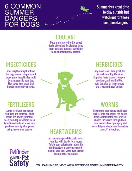 Be aware of these 6 common dangers to your pets. Share to keep dogs safe!