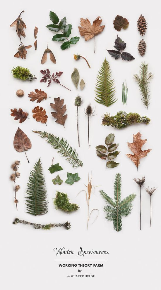 Winter Specimens //