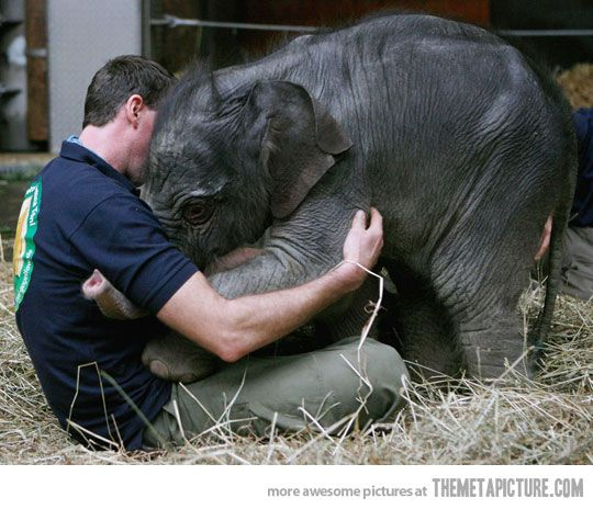 Baby elephant greeting the zoo keeper