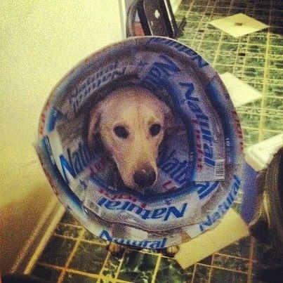 24 Pets Owning The Cone Of Shame