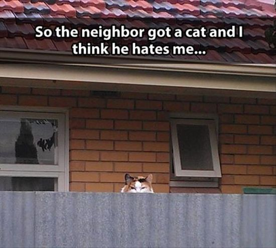 Funny Pictures Of The Day – 100 Pics