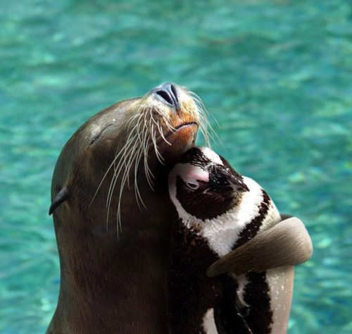 A seal hugging a penguin!