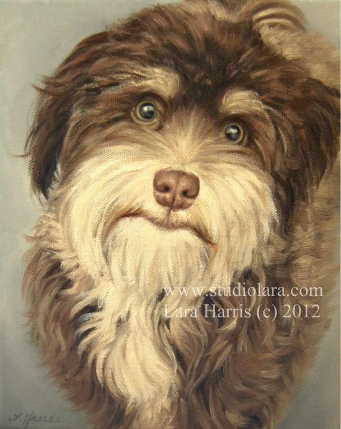 ? pet portrait in OIL  #havanese #pet portrait #dogs #oil painting