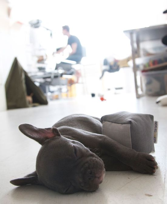 All tuckered out from a long day in the studio.