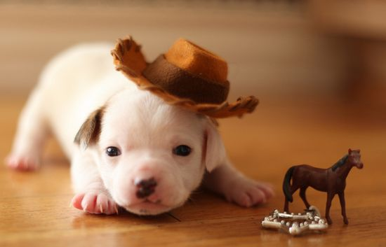 And here's a puppy who is also a cowboy.