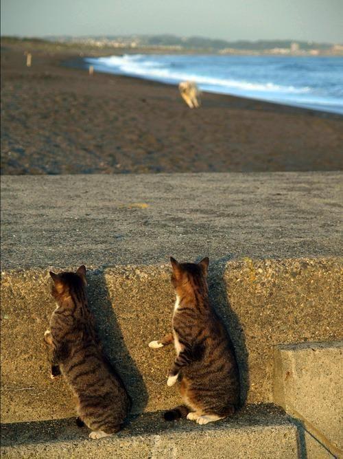 Hiding out til the coast is clear on dog beach