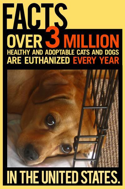 3 Million healthy and adoptable dogs and cats are euthanized every year spay - neuter - adopt - be part of the solution.