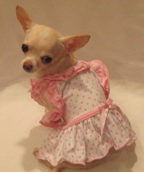 Bitty Baby Dog Dress