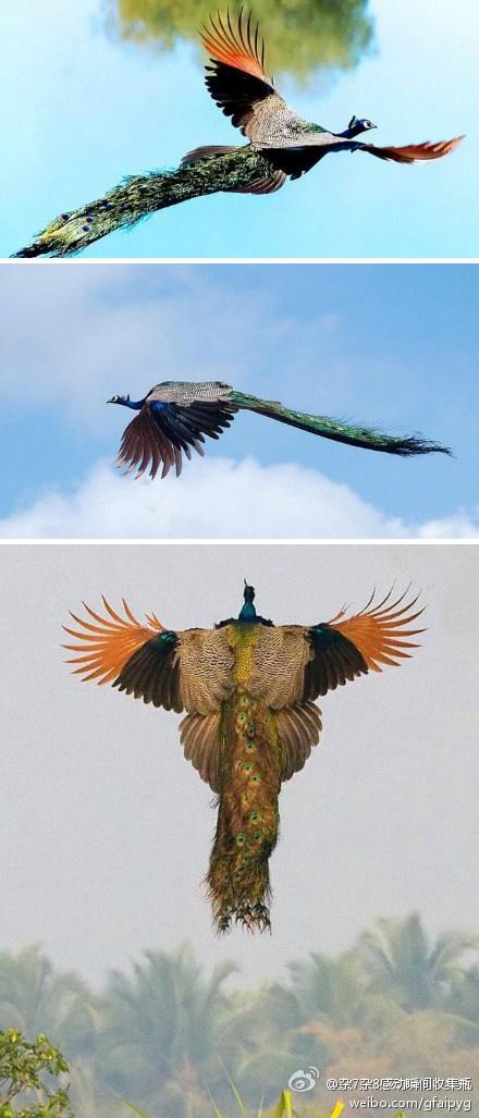 Ptice u letu - Page 2 09fd9c2b0613c70fb3f3617057bc2dad