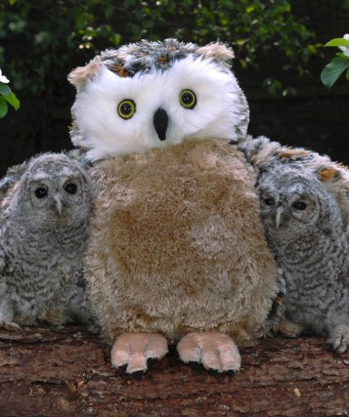 Owl chicks with Stuffed animal owl