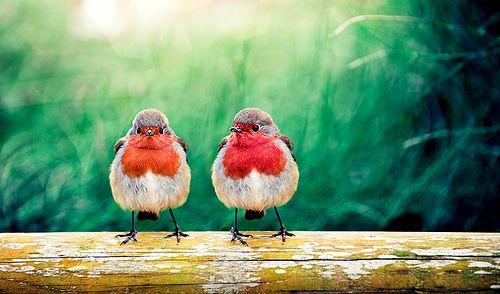. Love birds .