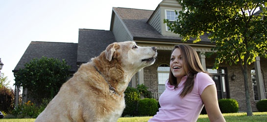 Top Tips for Moving with Your Pet!