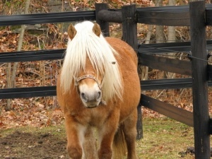 Twinkles is an adoptable Pony Pony in Middletown, NY. To fill out an adoption application for this horse, please click here . We'll review it and get back to you as soon as possible!  Please be patien...