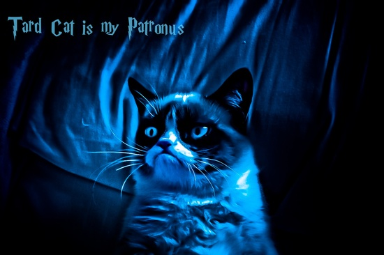 Tard Cat is my Patronus