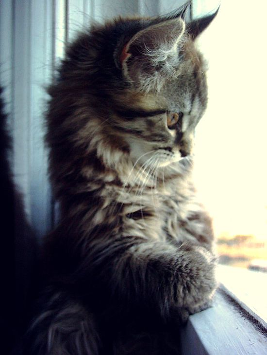 Such a darling kitten.