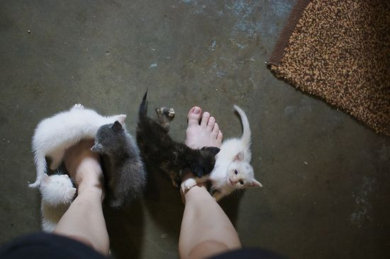 baby kittehs!