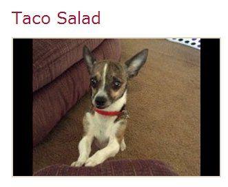 The dog named Taco Salad (photo by: VPI Pet Insurance) #pets