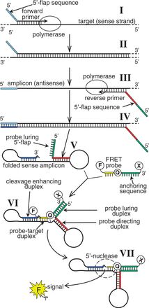 Angler PCR: Angling the Field Toward Universal Real-Time PCR Probes