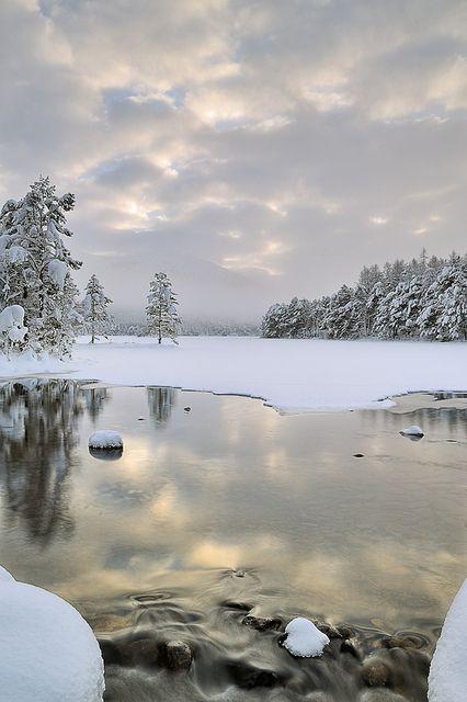 Before the Light, Cold - Loch An Eilean, Cairngorm, Scotland
