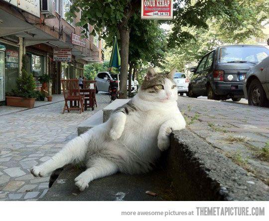 Oh fat cat...