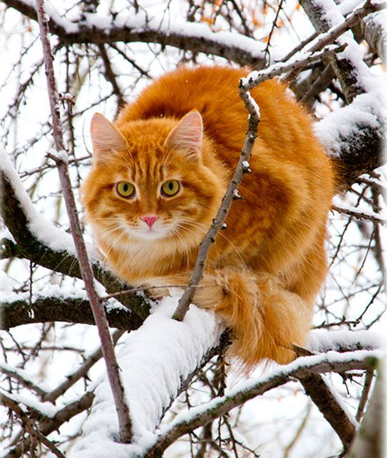Cat In The Snow In A Tree