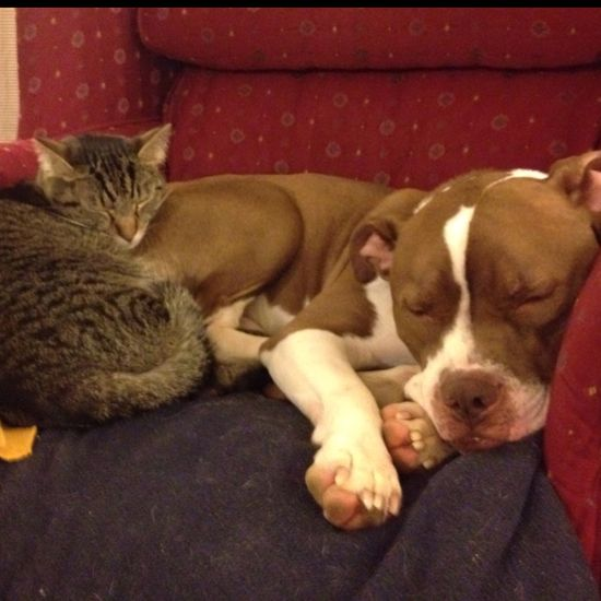 Awwww, it's Roxy and Tommy...minus the snuggle