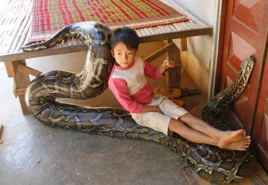 Cambodia : boy with pet python