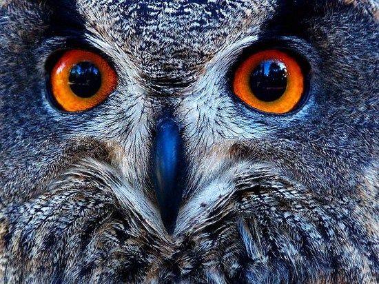 owl portrait inspiration.