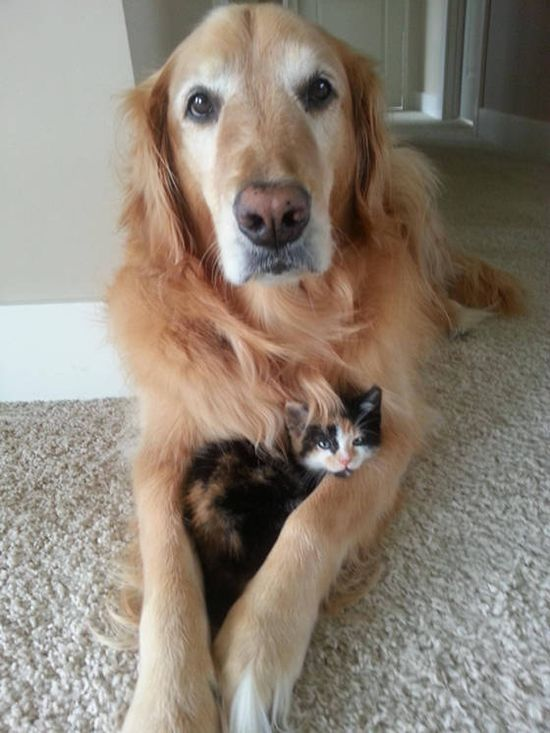 new kitten and her dog friend