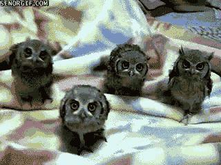 Cute baby owls ?