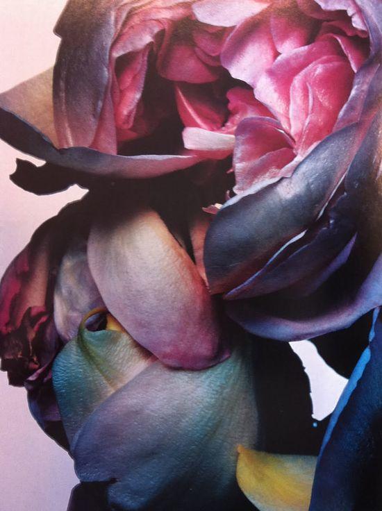 #Flower #petals #pink #blue #inspiration