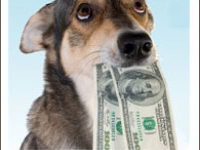 Think You Can't Afford Pet Insurance?  Consider This Cost-Effective Alternative  ......................................................... I found that some pet insurance companies offer highly-customizable plans where purchasers can control the premium costs...