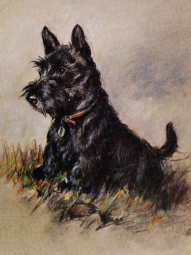 SCOTTISH TERRIER CHARMING SCOTTIE DOG GREETINGS NOTE CARD
