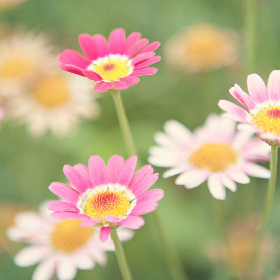 I will TRY to post a variety of colors of flowers....but I can't promise anything.  I do love pink flowers.