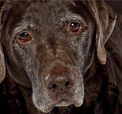 Senior Dogs Are Beautiful #pet girl #pet boy