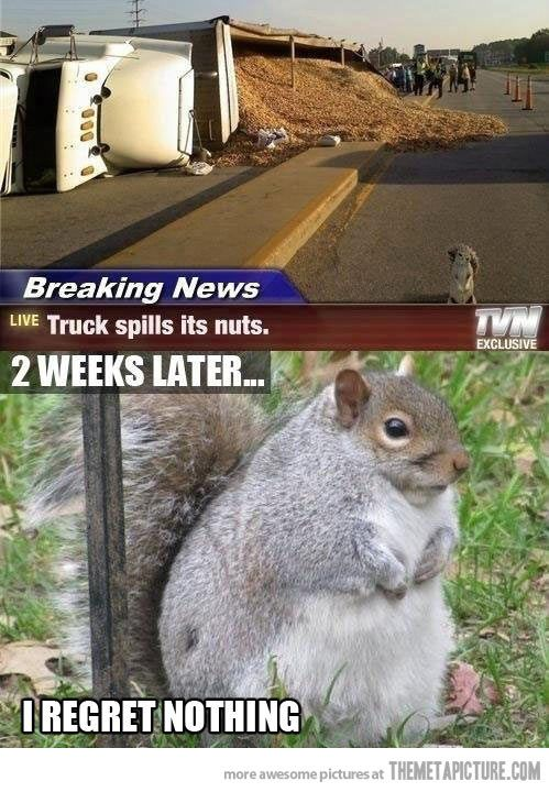 Chubby squirrel regrets nothing... - The Meta Picture