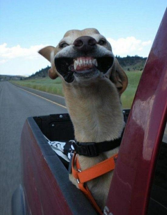 Funny Photos – Dog Wind Sailing on www.thatsjackedup...