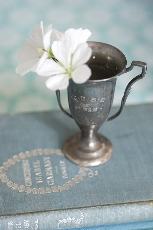 simple white bloom in a silver trophy cup