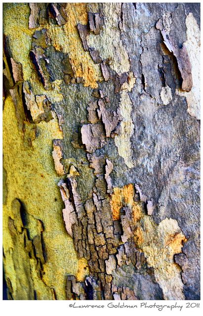 Peeling Tree Bark, inspiration