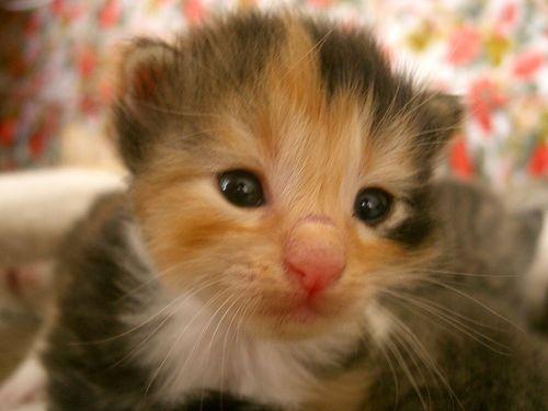 Itty bitty kitten.  ?